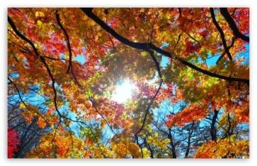 autumn_sunshine-t2.jpg