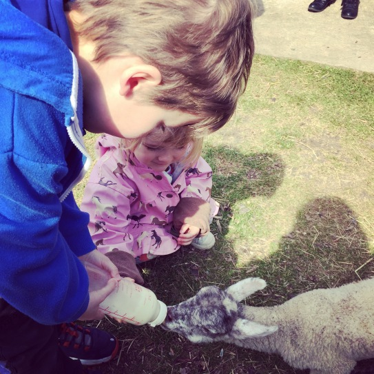Children feeding a lamb with a bottle